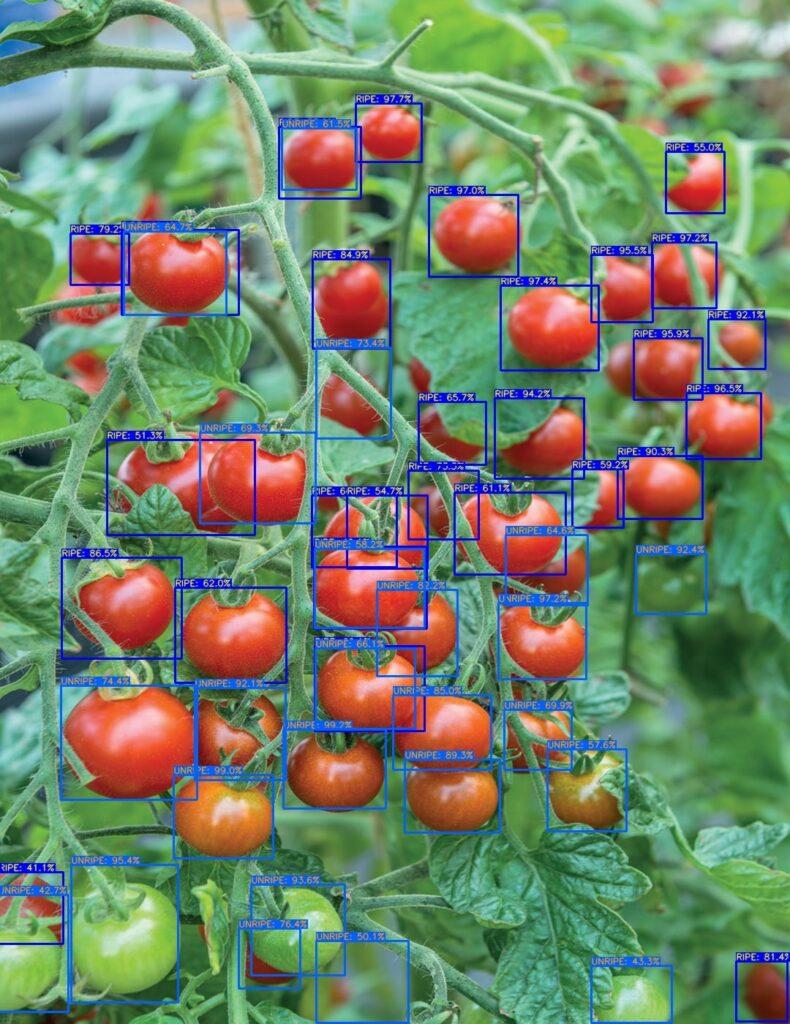 Détection tomate (0.4)