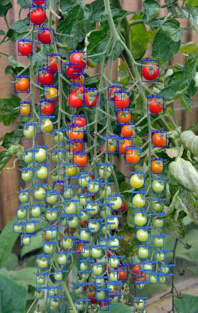 Détection tomate (0.5)