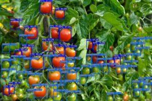Détection tomate (0.6)