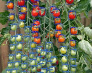Démo Détection tomates